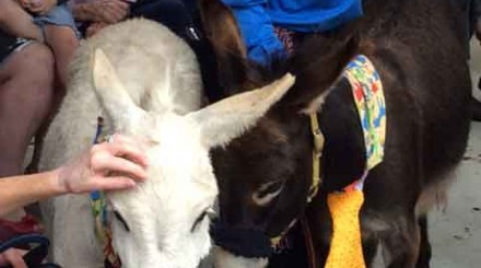 donkeys at Uniting AgeWell