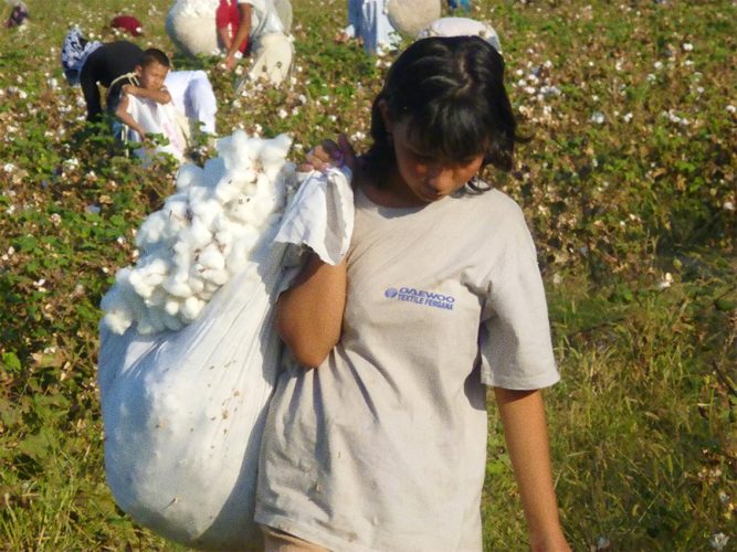 cotton uzbekistan