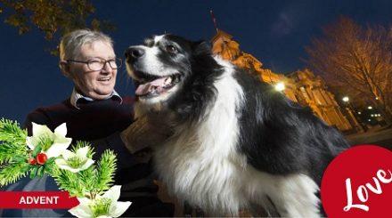 advent dog