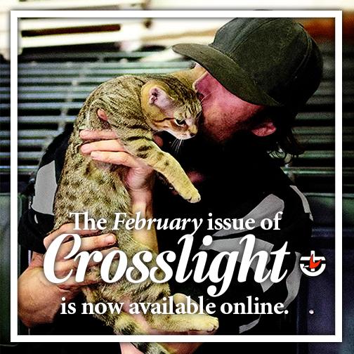 Crosslight February 2018 banner