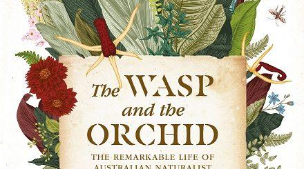 WaspOrchid440