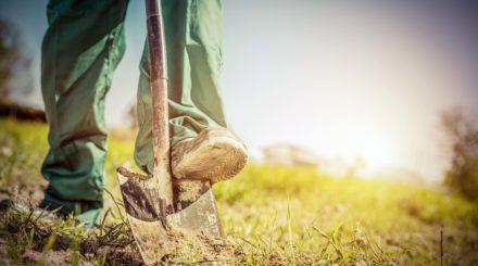 Gardener digging in a garden with a shovel.